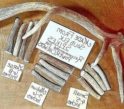 Elk Spike Tine Antler Dog Bone Chew Treat Toy POWER CHEWERS