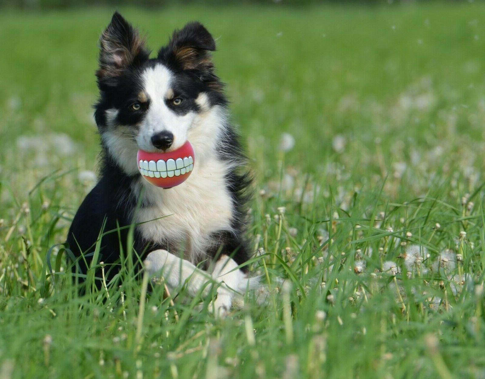 6 Pack Squeaky Toys for Ball