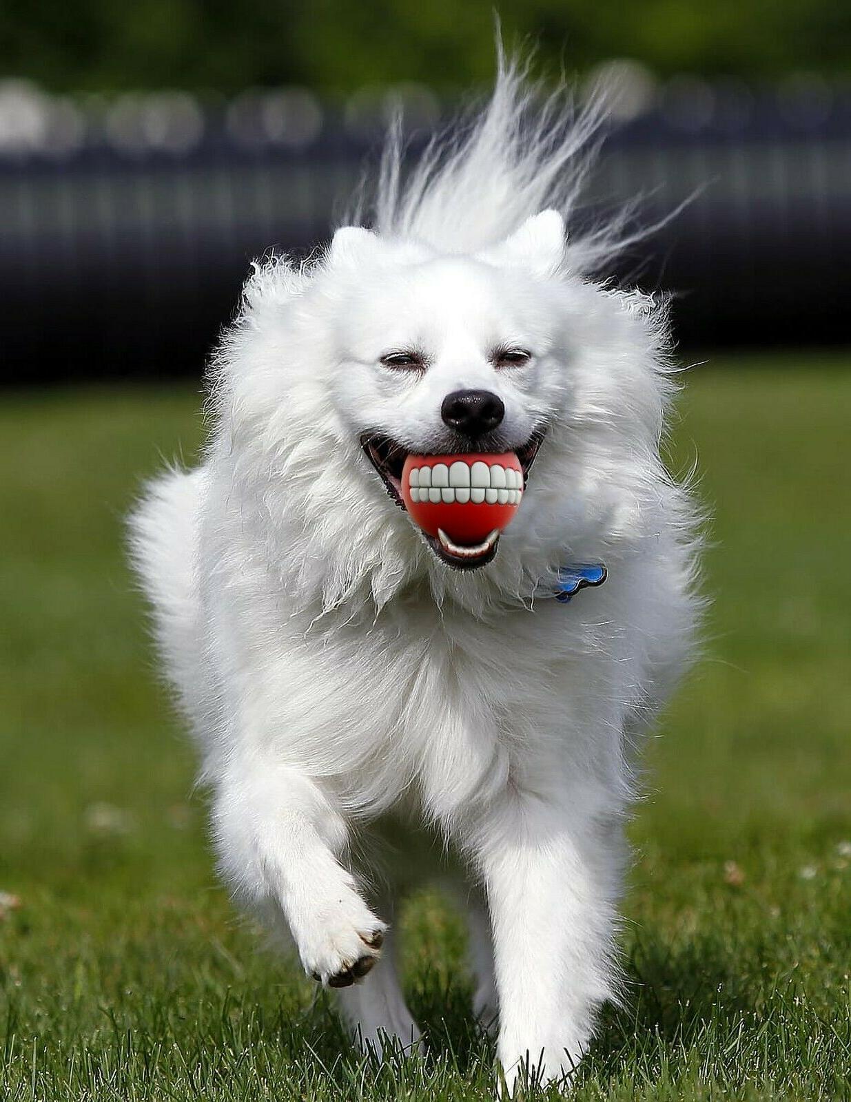 6 Balls Squeaky Toys Dog Gag Human Teeth Ball