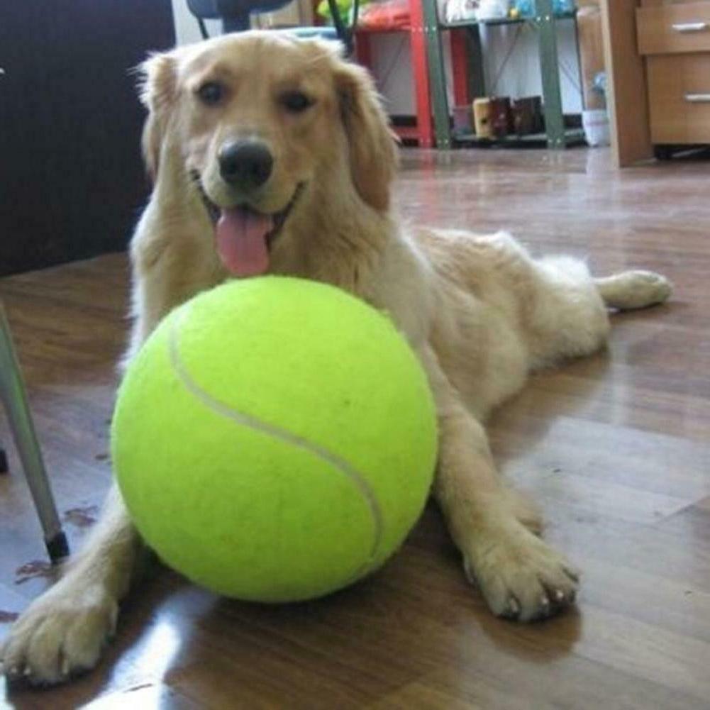 9 5 big giant pet dog puppy