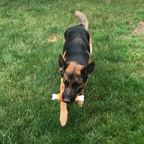 Jalousie 12 Squeaky Toys Medium Dog
