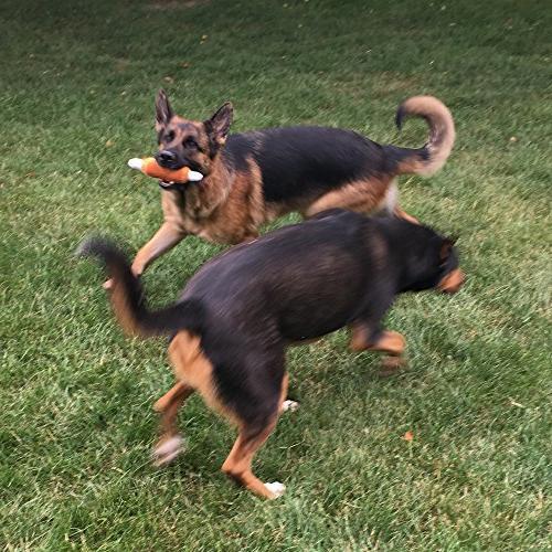 Jalousie 12 Squeaky Toys Plush Toys for Small Medium Dog Pets