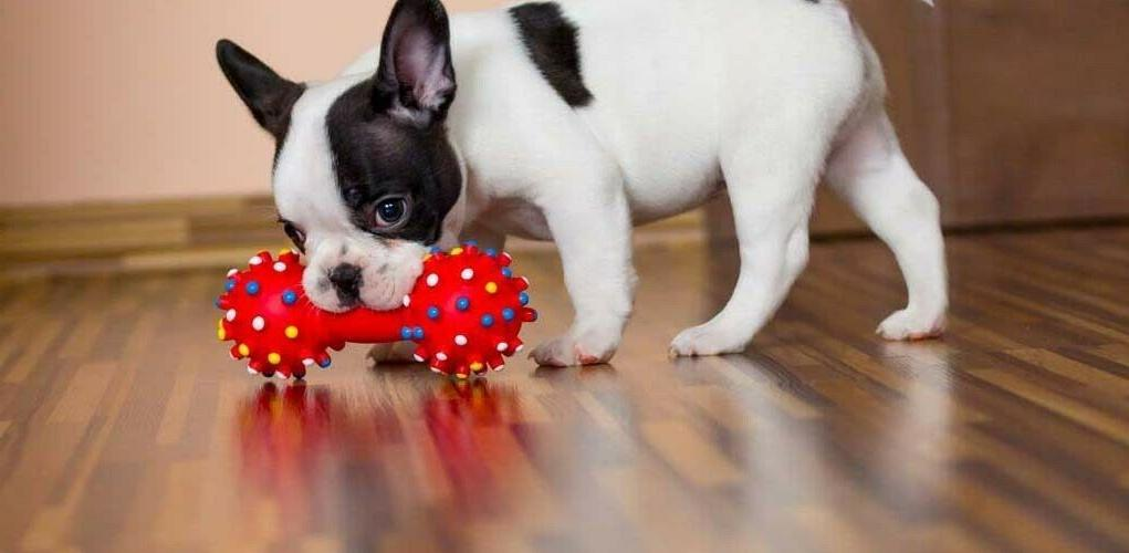 Chew and Dog Toys for Puppy and 6 pcs inside