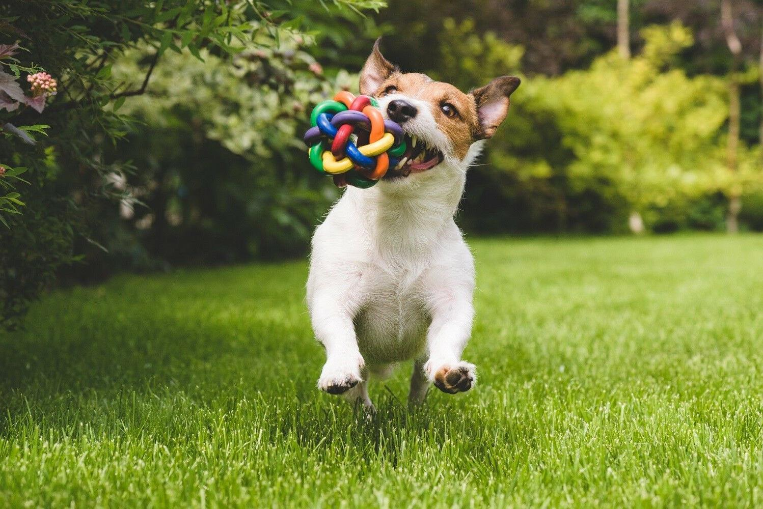 Chew and Dog Toys for Puppy and Small Medium 6 pcs inside