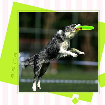 Dog Toy Pet Puppy Flying New