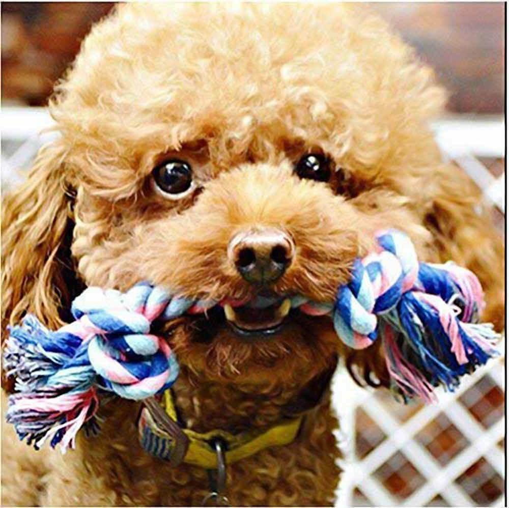 Dog Toys Play Medium Puppies Durable