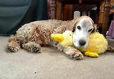 Multipet Duckworth Duck Large 13 inch Dog Toy - Yellow