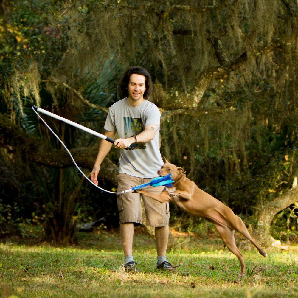 flirt pole v2 dog exercise and training