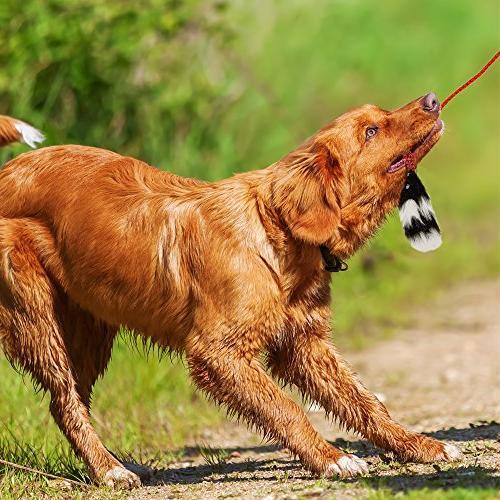 Outward Dog