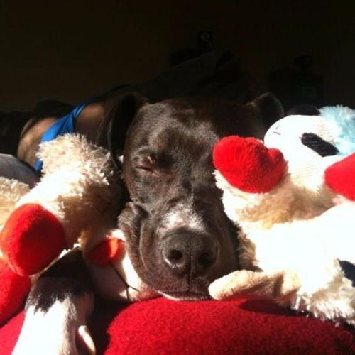 Lamb Squeaker Multipet Adorable Cuddle & Play Fetch
