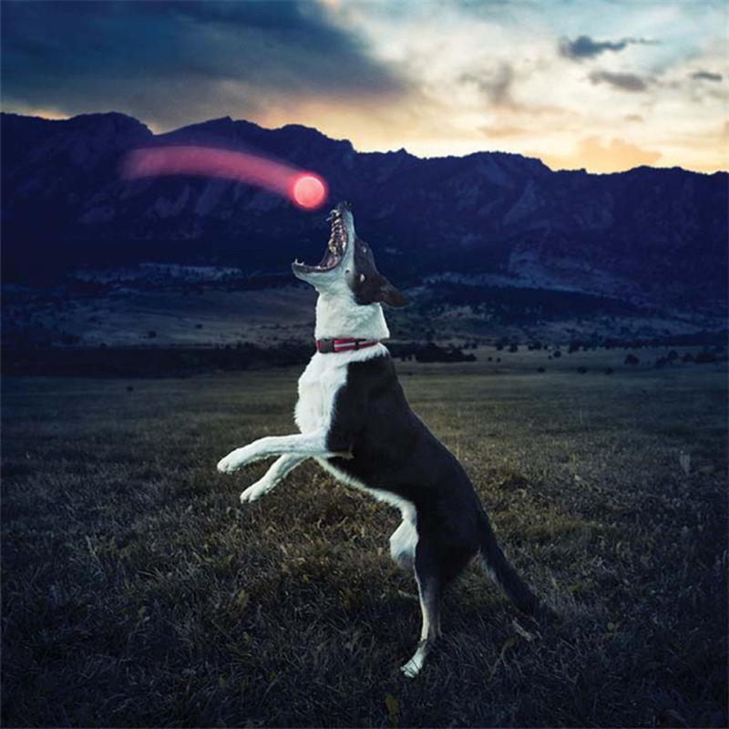 LED Streak Dog Ball Lights Up Night