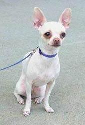 Coastal Pet Li`l Pals Adjustable Nylon Dog Collar