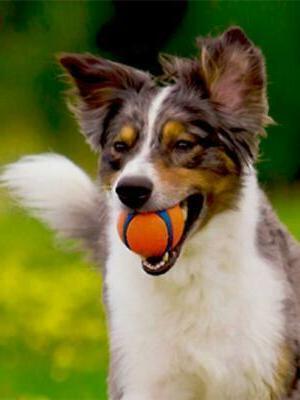 New Dog Ball And Floats Bright Blue Medium