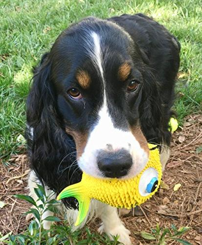 Sensory Fish Dog Toy.100% Natural Rubber & Complies to Same Safety Kids' Toys. Squeaky. Best Dog Toy Small-to-Medium and Dogs