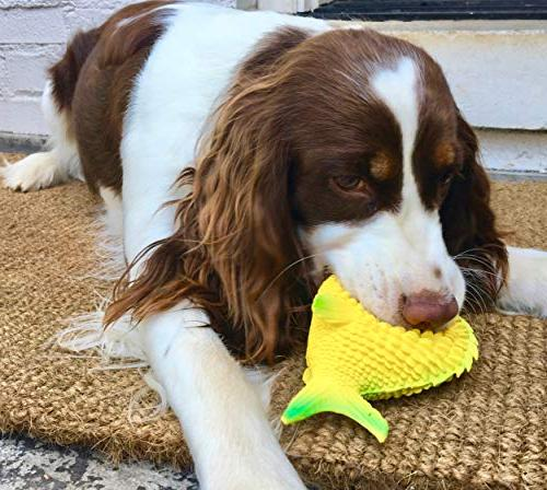 Sensory Toy.100% Natural Rubber . & Same Safety Standards as Kids' Toys. Best Small-to-Medium Dogs and Blind Dogs
