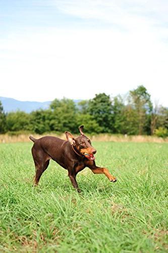 Canine 2
