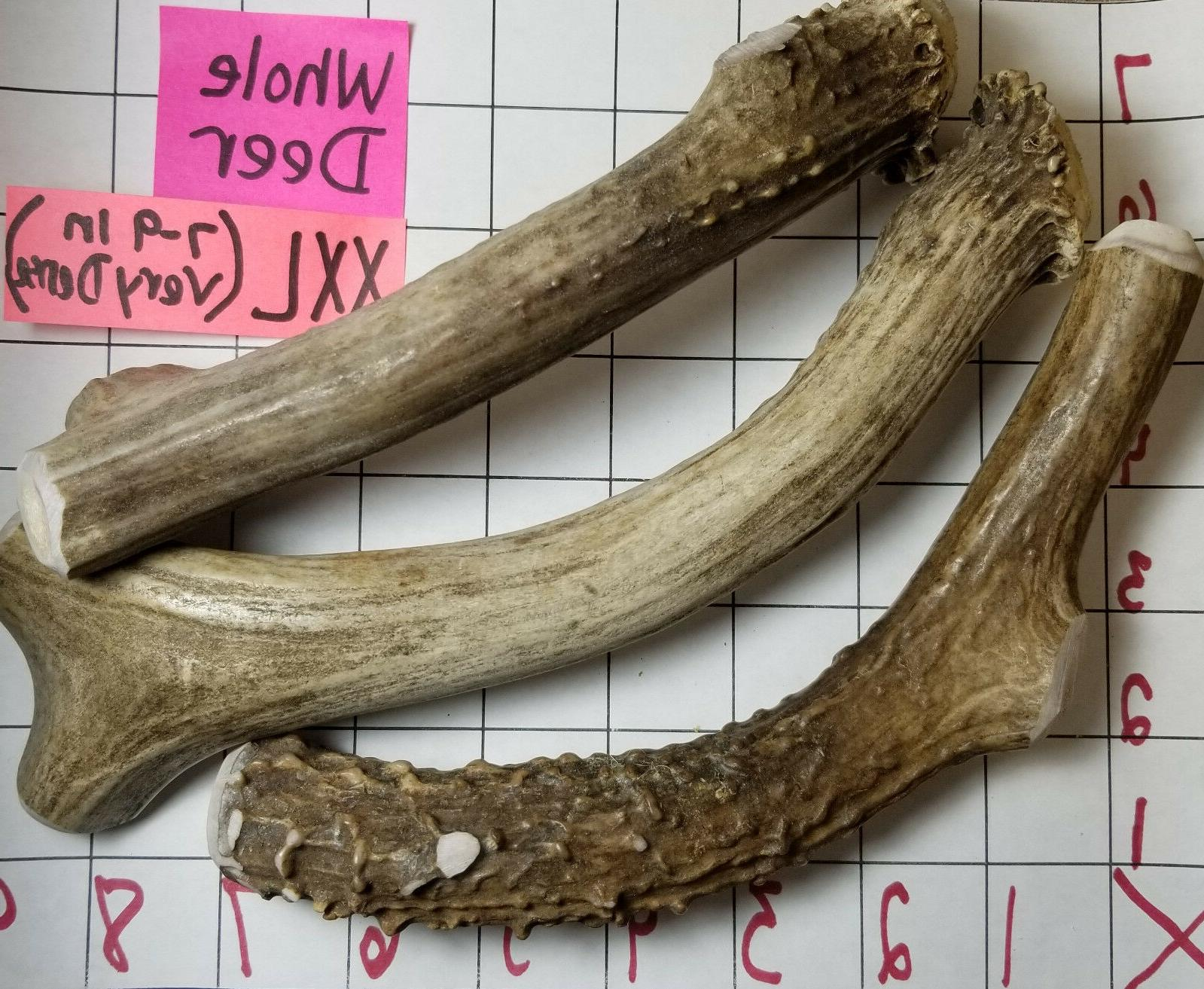 Whole Real MULE DEER ANTLER Dog Bone Chews Small Medium Larg