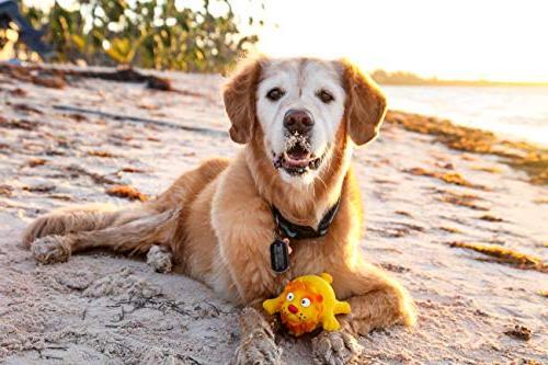 Hartz Dura Play Dog Toy