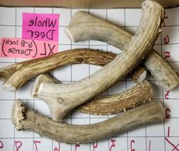 whole real mule deer antler dog bone